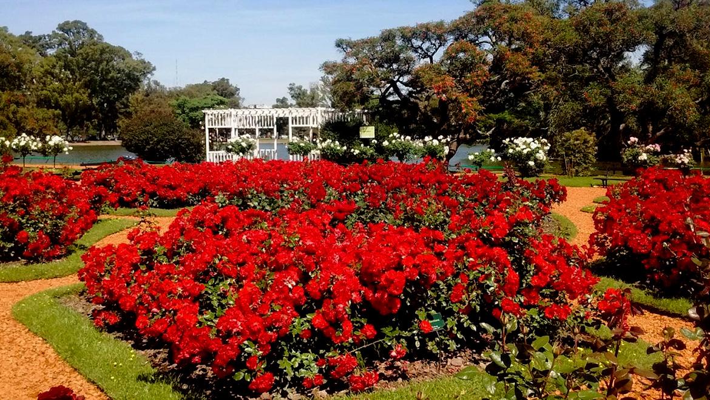 131-rosedal-de-palermo-reconocido-con-el-premio-internacional-garden-excellence-award-817-big